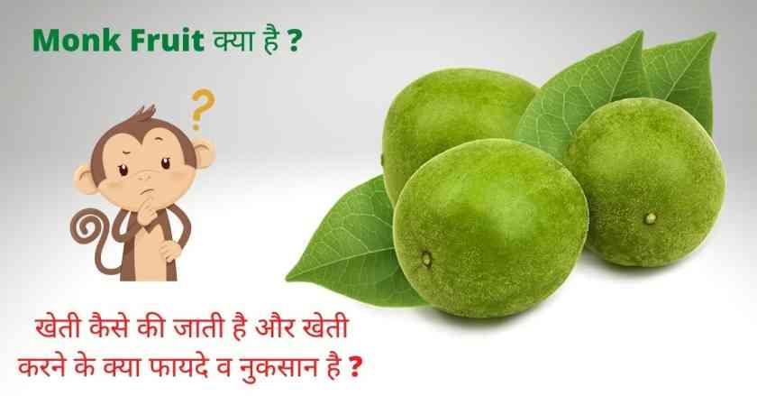 monk fruit in hindi